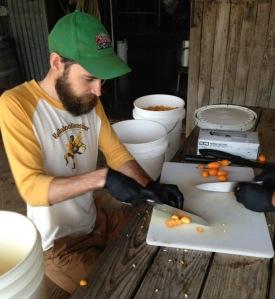 Garret Crowell cutting kumquats for Vernal Dichotomous